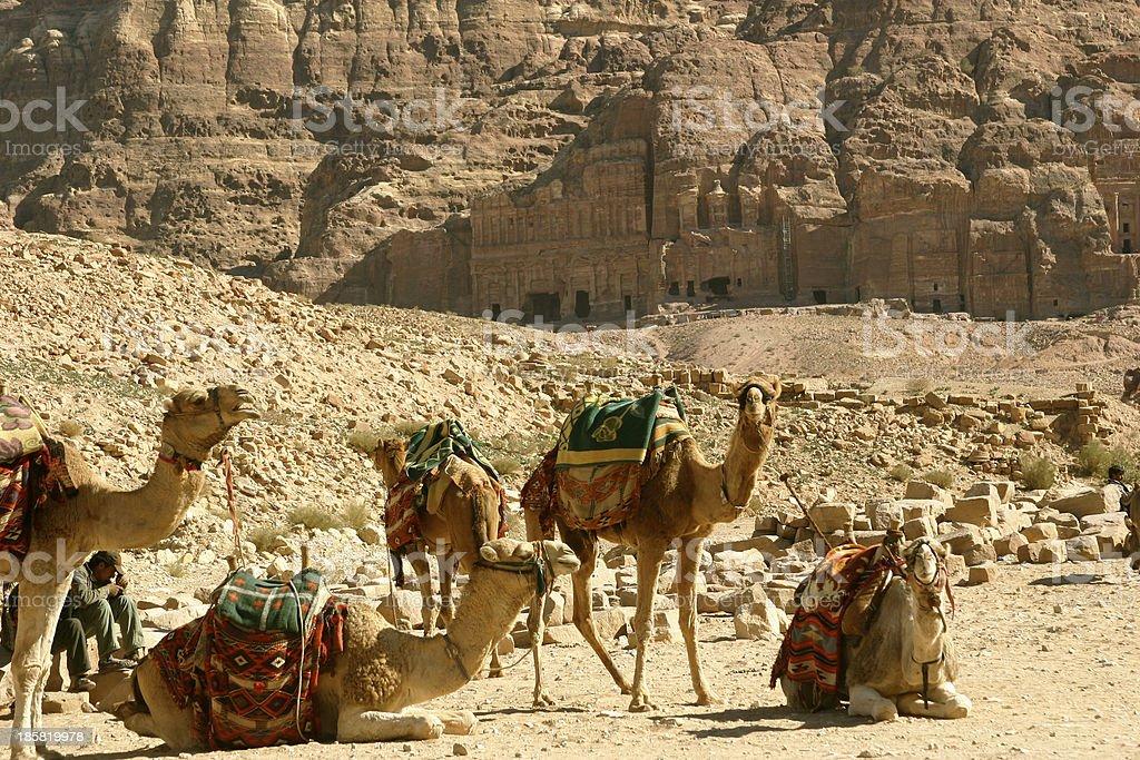 Camels at Petra royalty-free stock photo