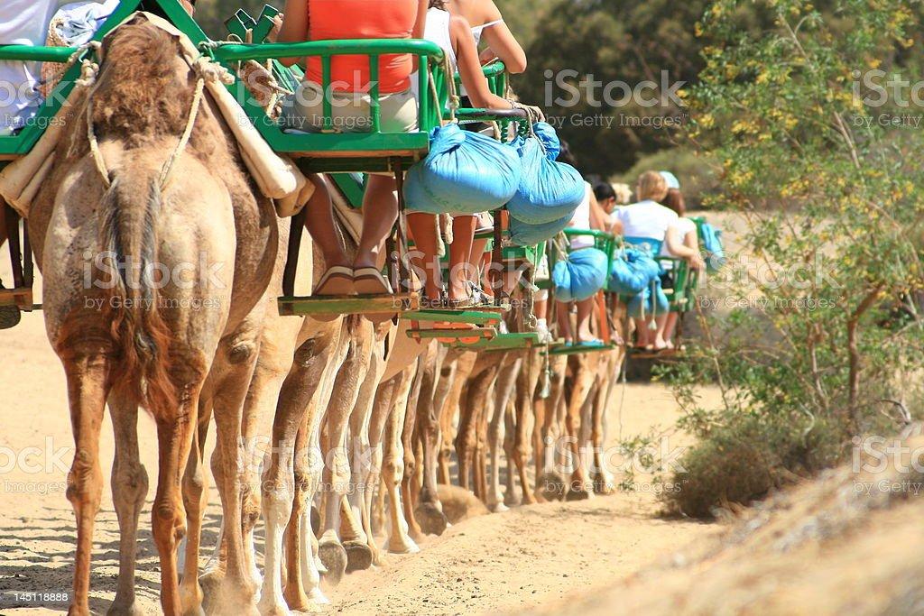 Caravana de camellos de turistas foto de stock libre de derechos
