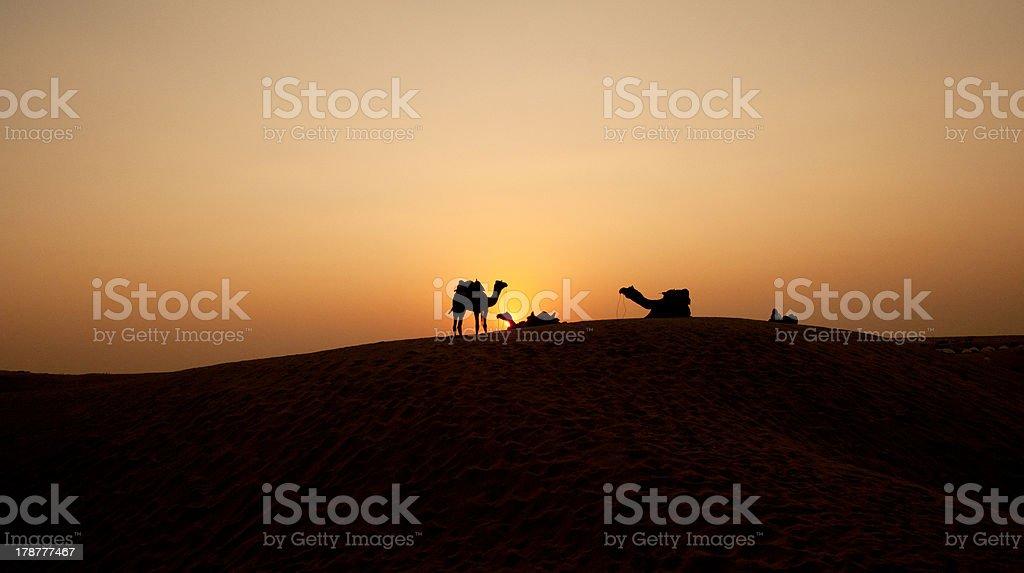 Camels, Dunes, Desert royalty-free stock photo
