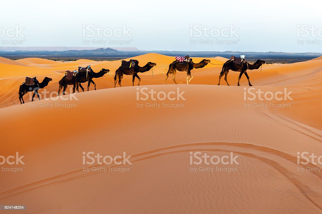 Camels in a series of walk-up, Erg Chebbi, Morocco stock photo
