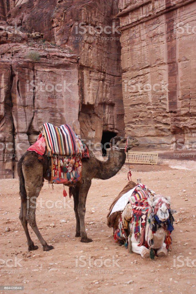 Camels in nabatean city of Petra, Jordan Middle East stock photo