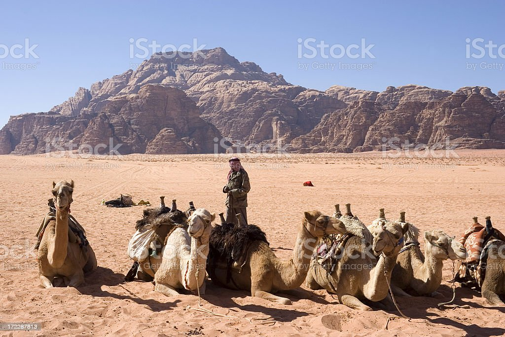Camels in Wadi Rum, Jordan royalty-free stock photo