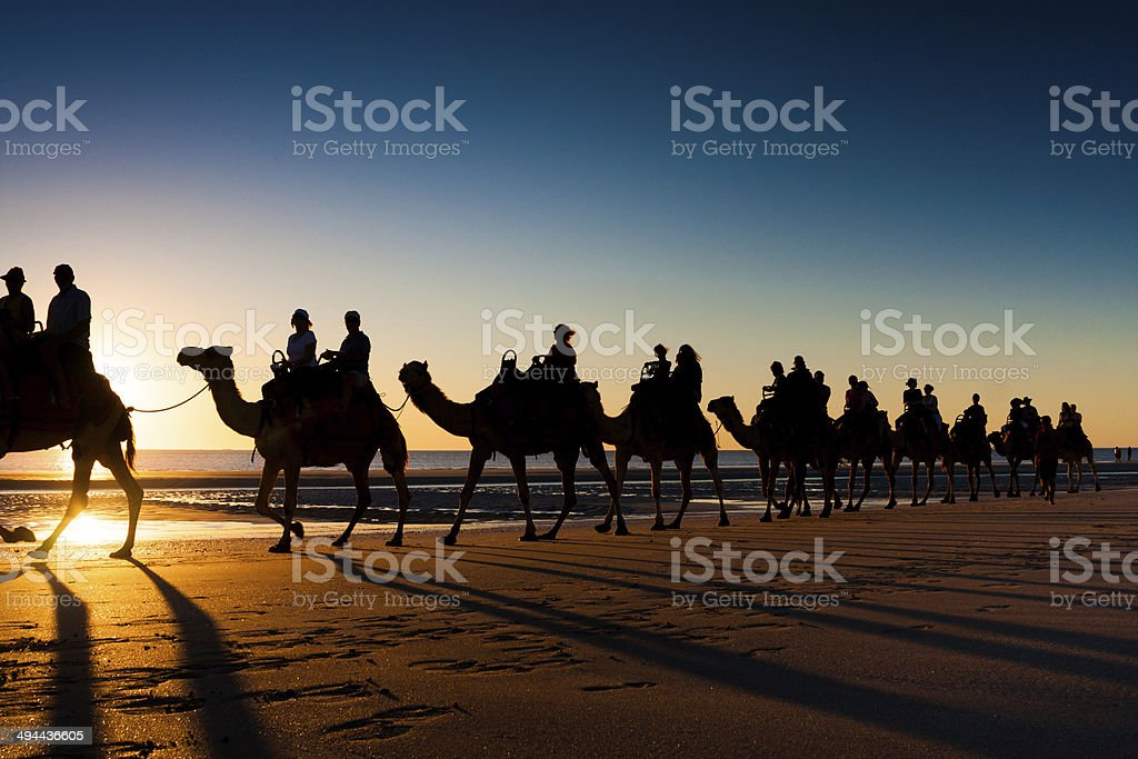 Camels on Cable beach, Broome, Australia stock photo