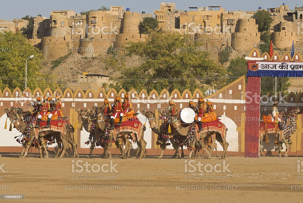 Camels on Parade stock photo