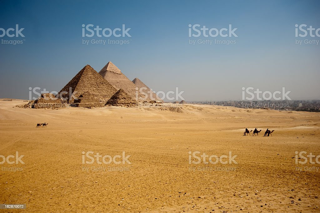 Camels on the Giza plateau the great pyramids royalty-free stock photo