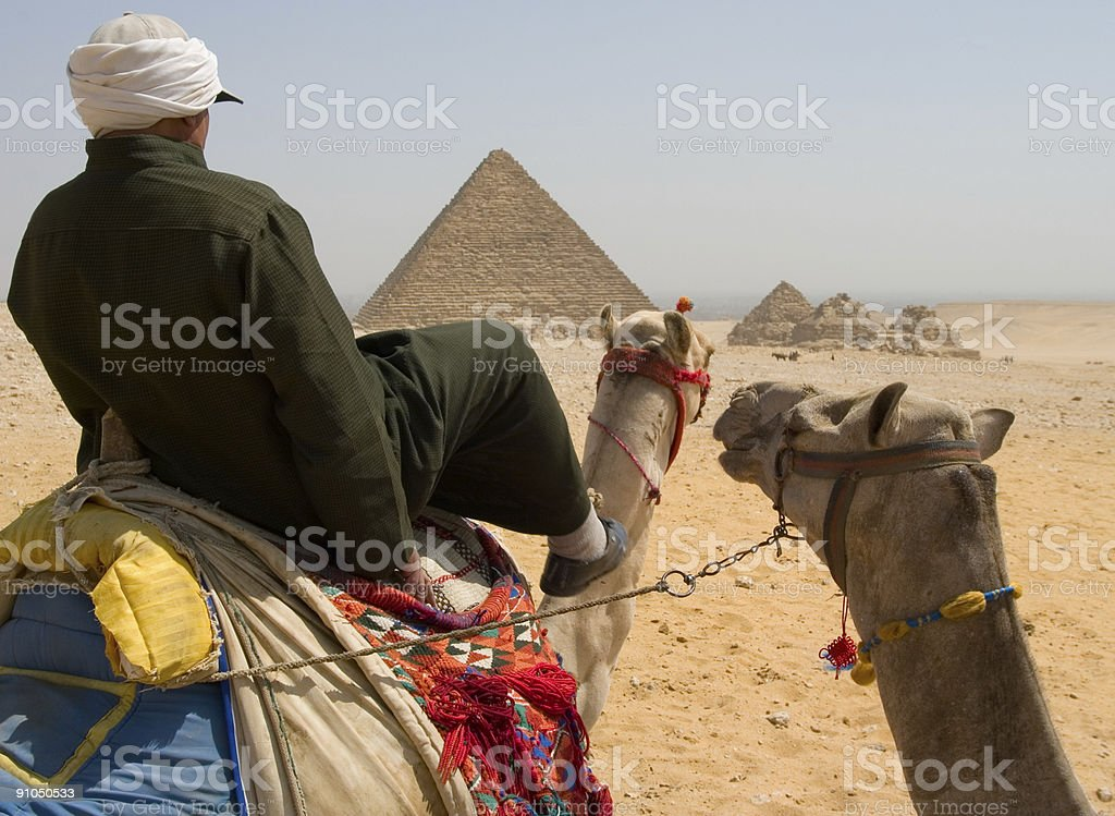 Camels with pyramids royalty-free stock photo