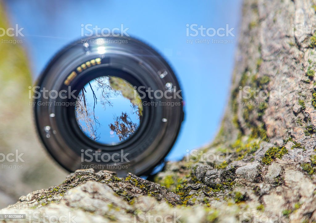 Camera Lens in tree stock photo