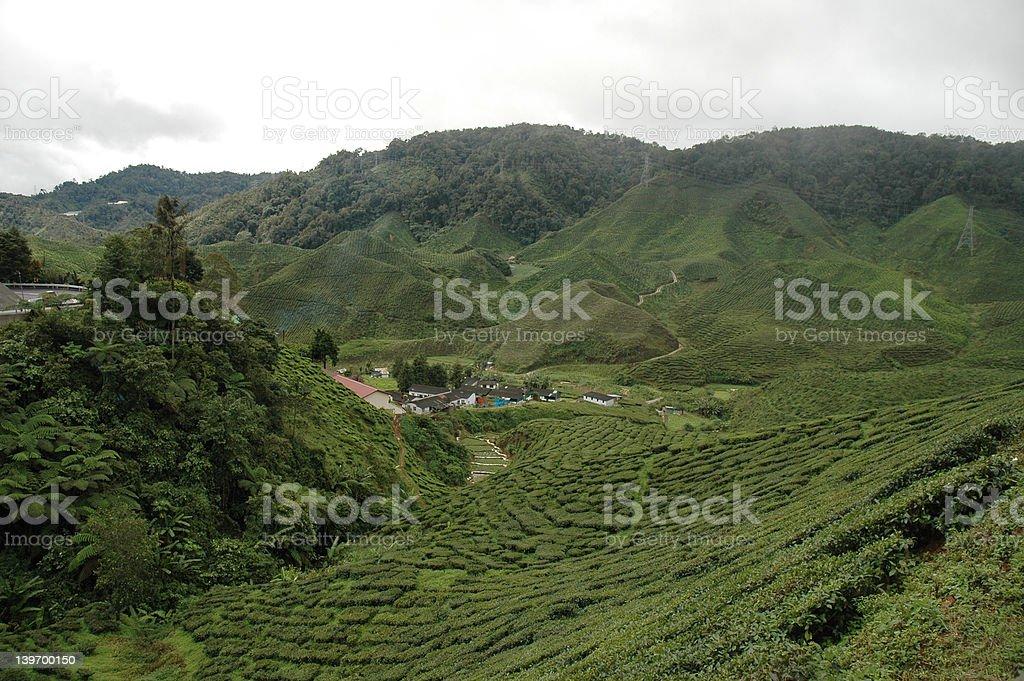 Cameron Highland - Tea plantation and factory royalty-free stock photo