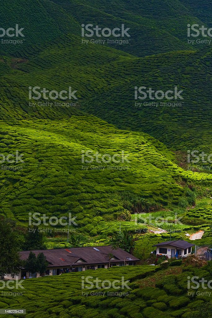 Cameron Highlands royalty-free stock photo