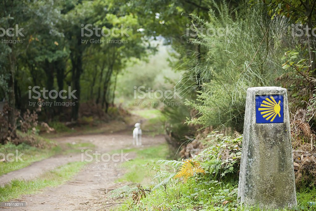 Camino de Santiago and  pilgrims shell stock photo