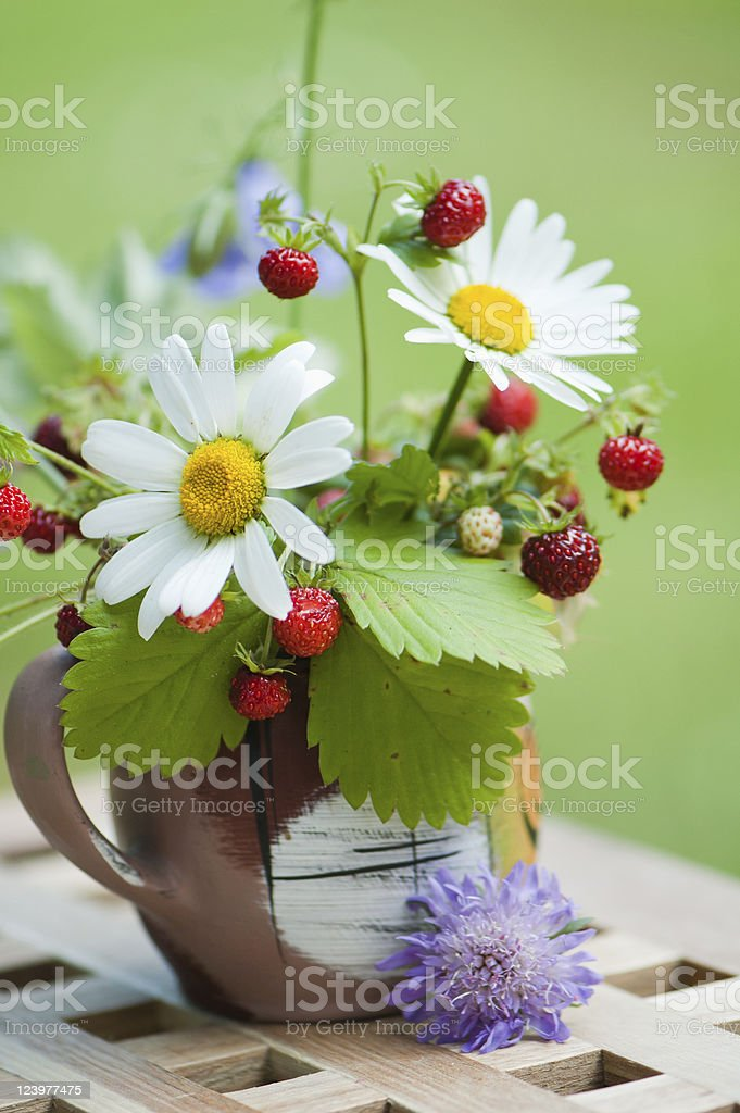camomile and wild strawberry royalty-free stock photo