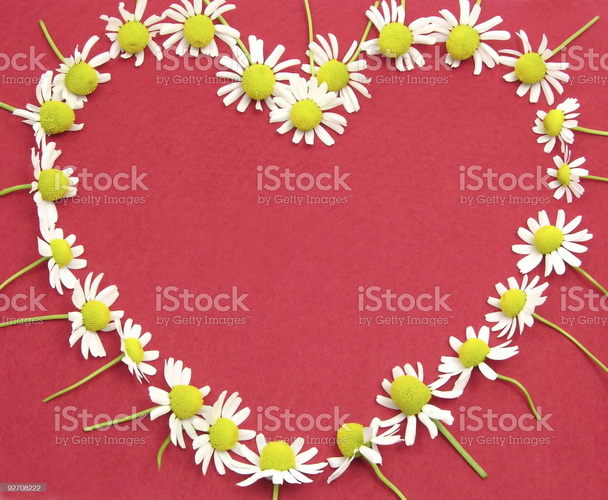 Camomile blooms on red felt heart shaped royalty-free stock photo