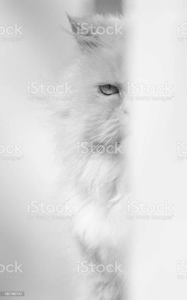 Camouflage Cat stock photo