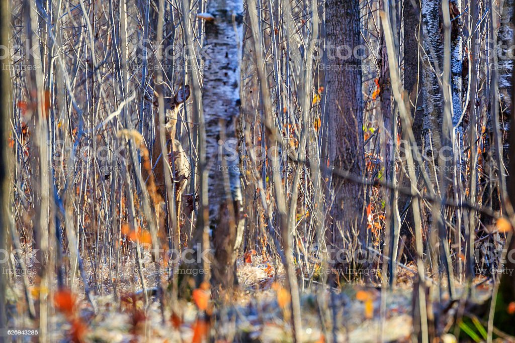Camouflage Deer stock photo