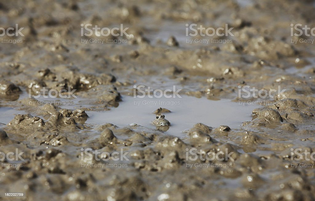 Camouflaged stock photo