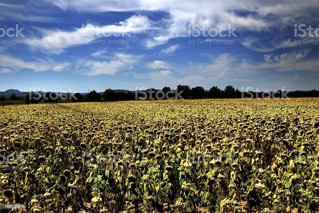 campagna toscana stock photo
