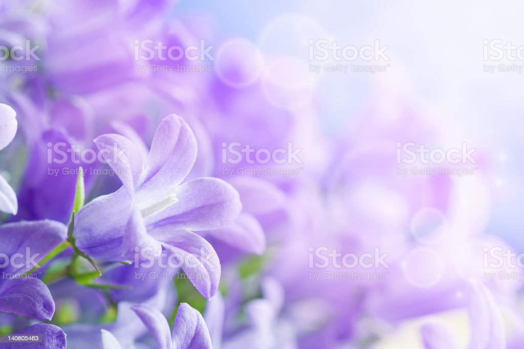 Campanula background stock photo