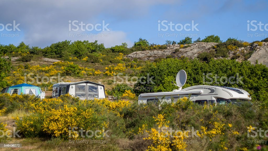 Campers in RV's between common broom bushes stock photo