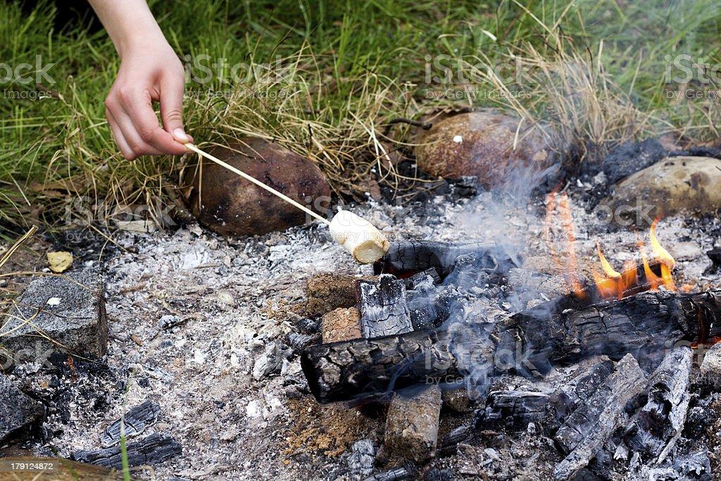 campfire marshmellows royalty-free stock photo