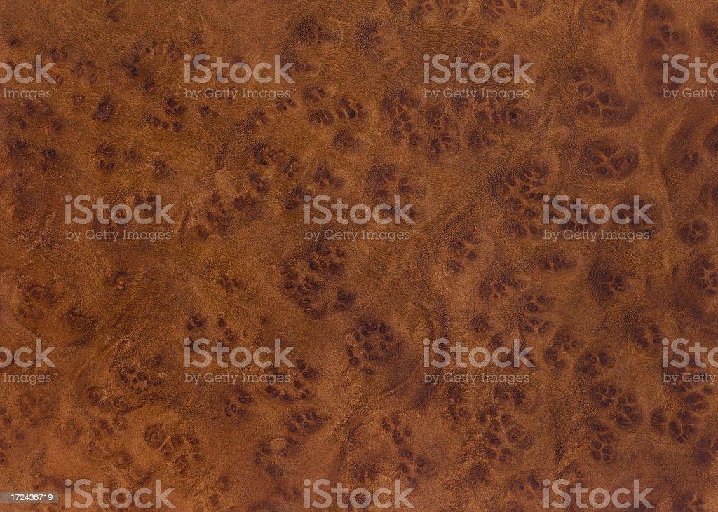 Camphor Burl Wood Grain Background stock photo