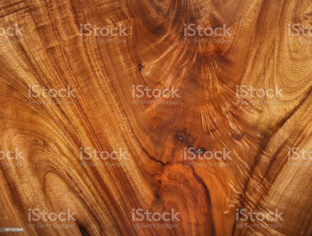 camphor laurel timber stock photo