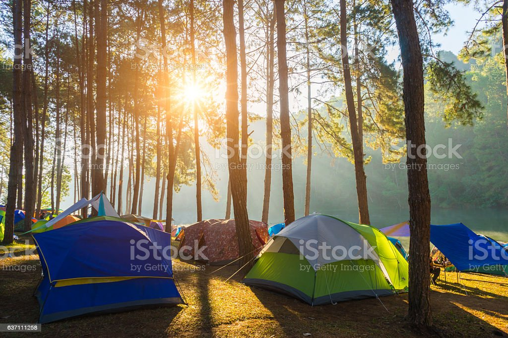Camping and tent under the pine forest in sunrise stock photo