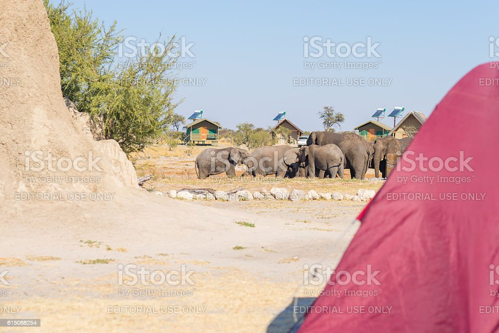 Camping close to Elephants, Africa stock photo