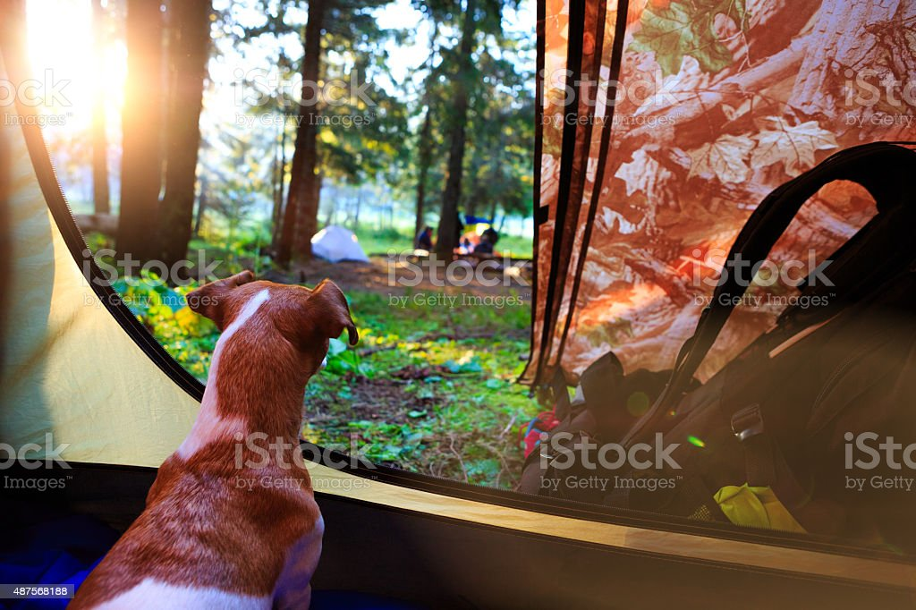 Camping from tent view stock photo