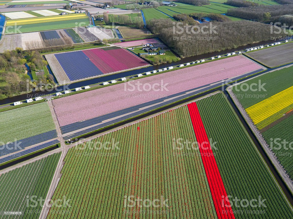 camping site besides tulip fields in Holland stock photo