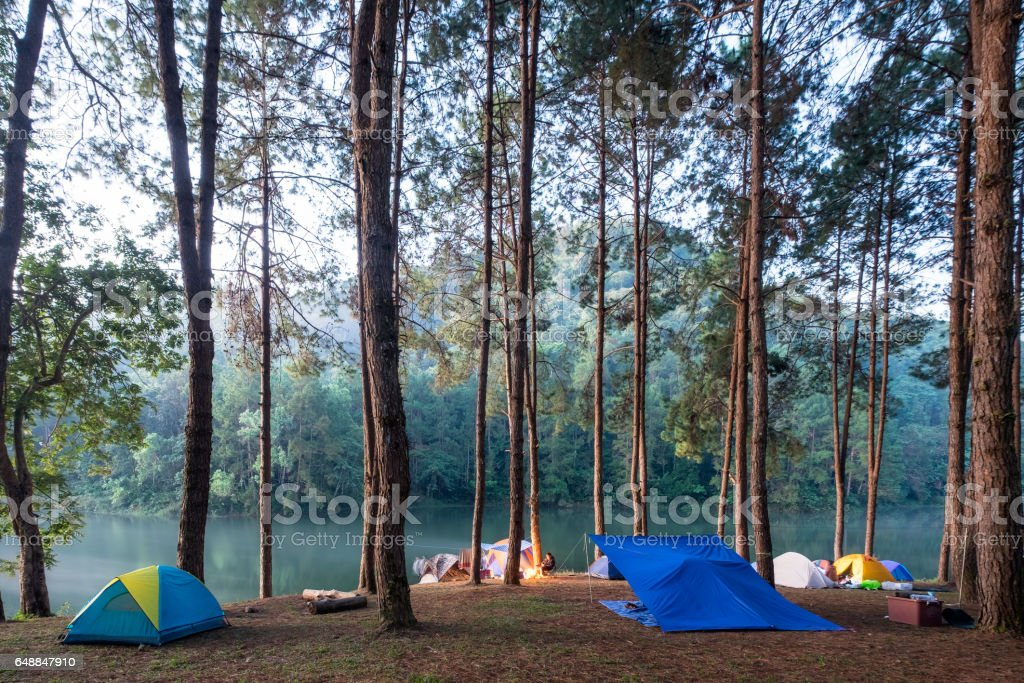 Camping tent in pine forest on reservoir in evening stock photo