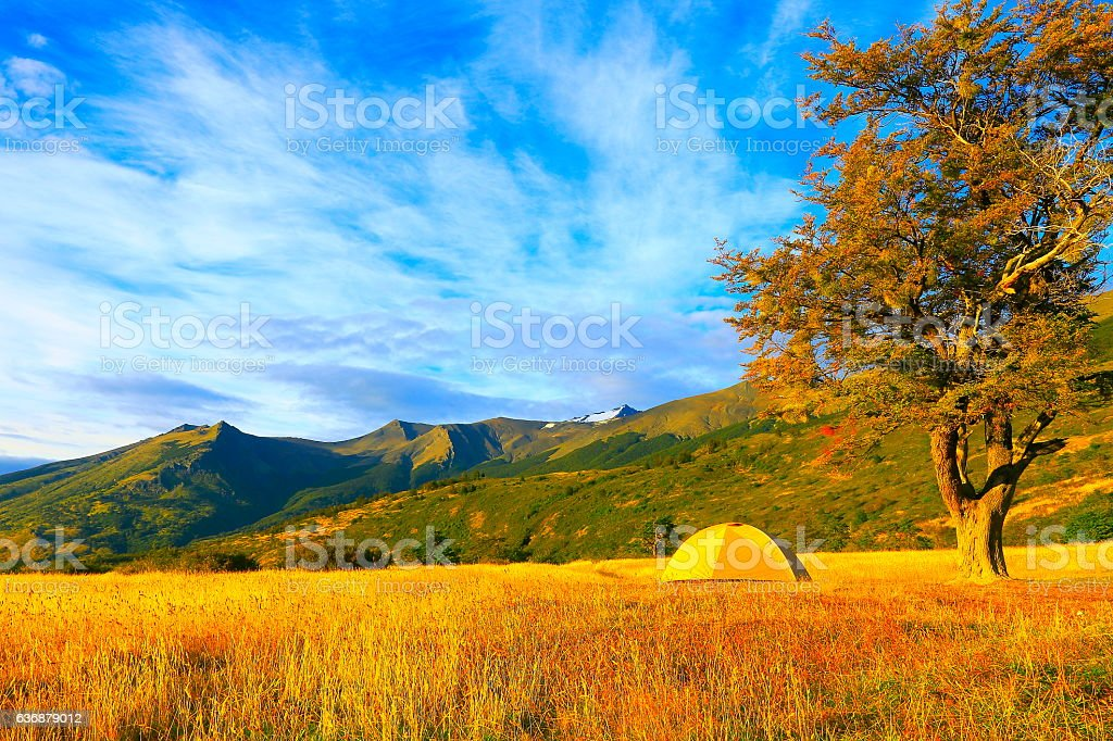 Camping tent, lonely tree, Wilderness landscape gold sunrise, Patagonia stock photo