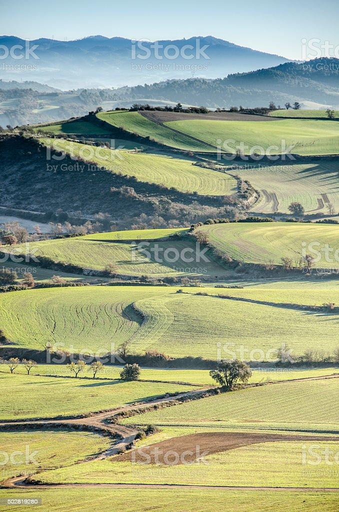 Campos de cultivo stock photo