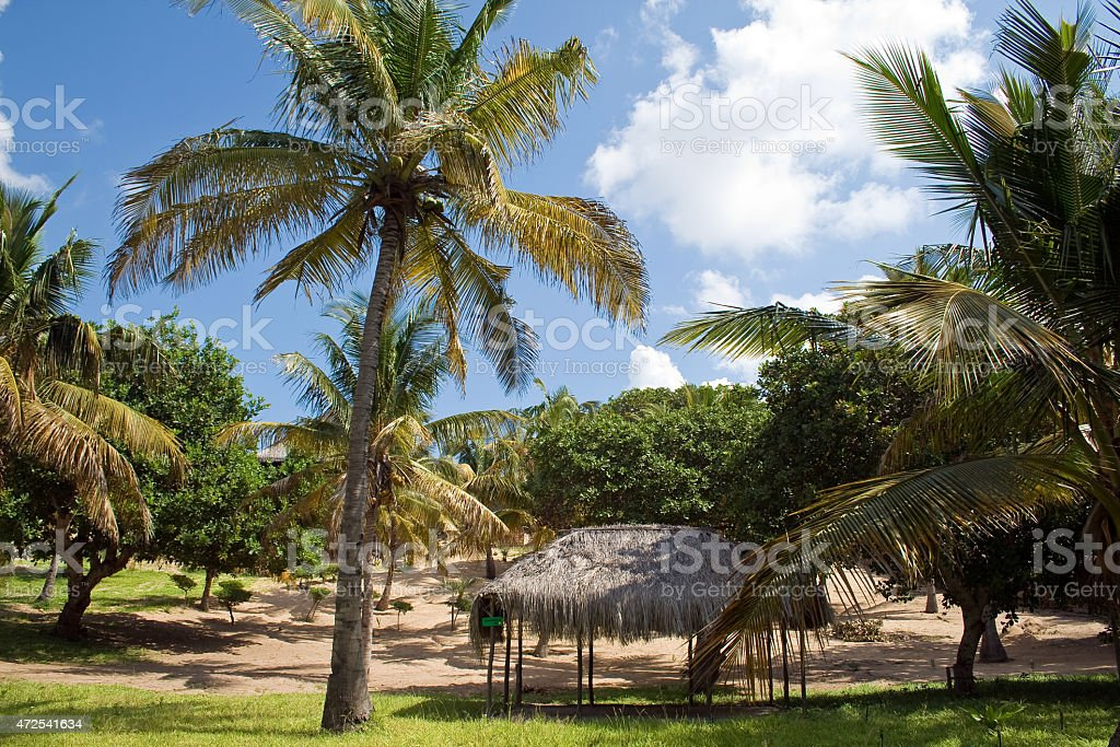 Campsite in Mozambique. stock photo
