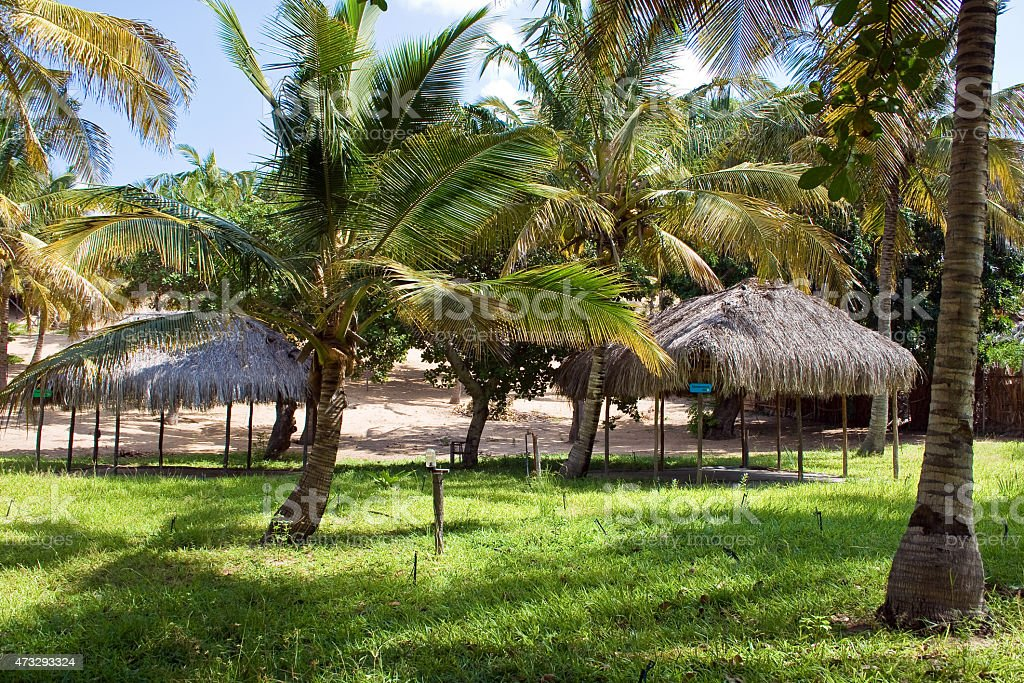 Campsite in Mozambique stock photo