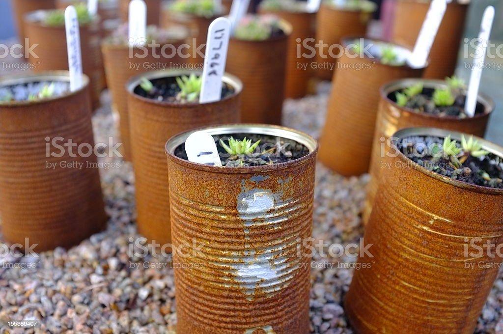 Can garden. royalty-free stock photo