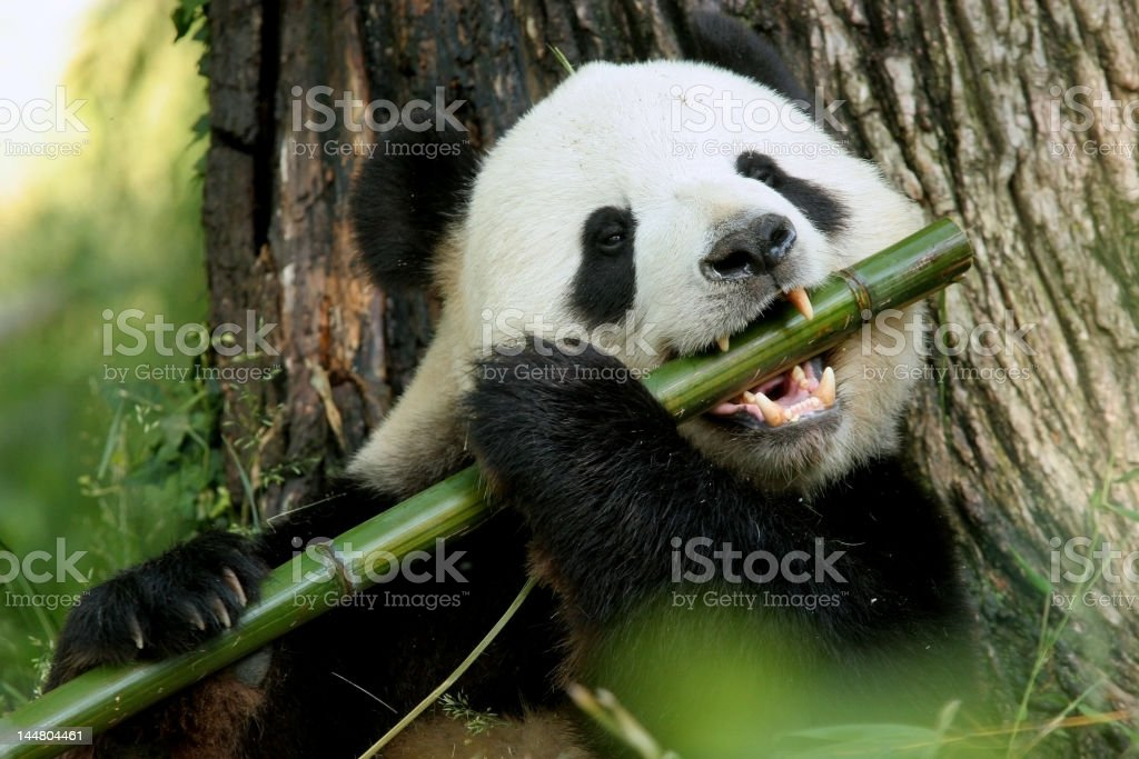I can play the Flute! stock photo