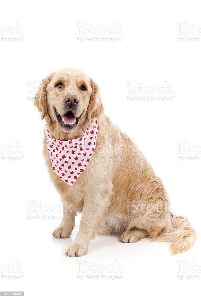 Canada Day Dog royalty-free stock photo