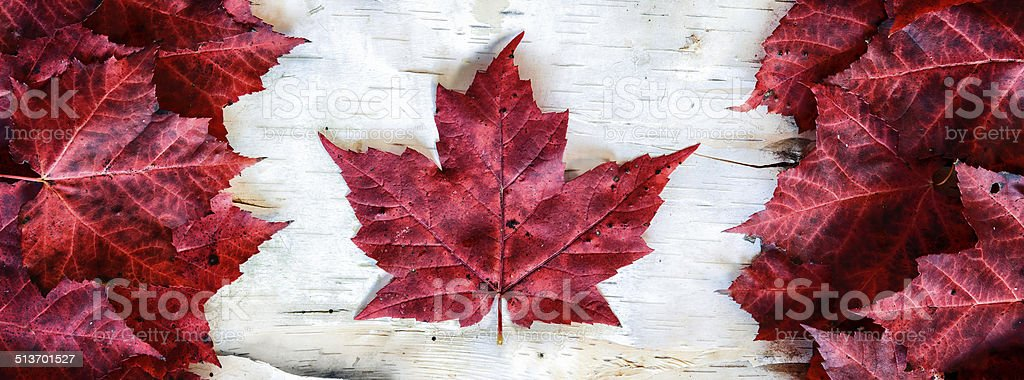 Canada Flag Made with Leaves on Birch - Banner stock photo