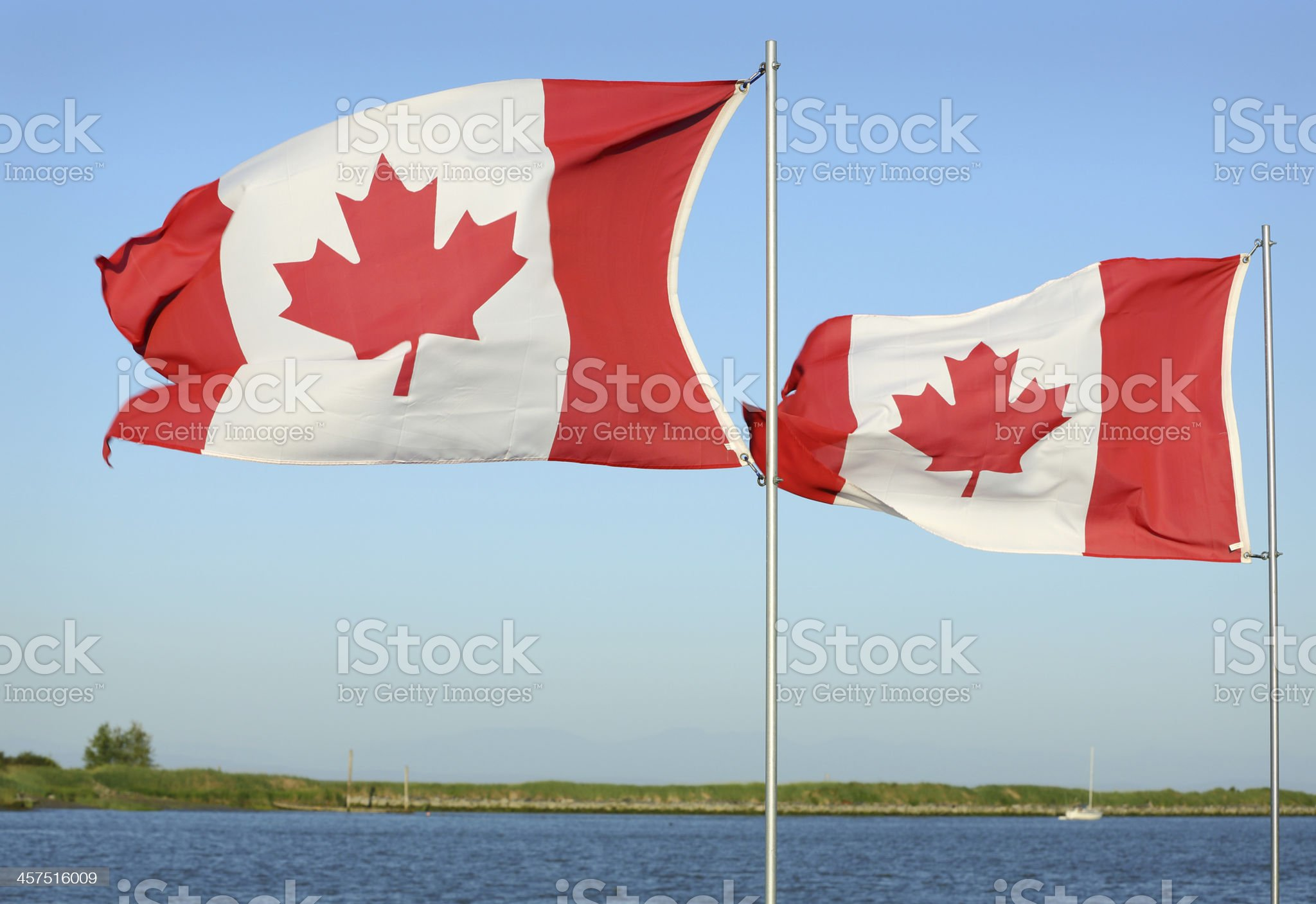 Canadian Flags in Sunshine royalty-free stock photo