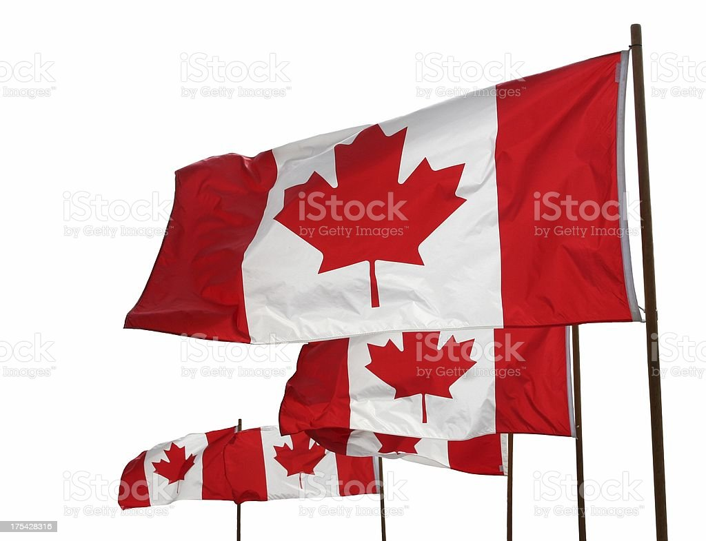 Canadian Flags Waving Proudly royalty-free stock photo