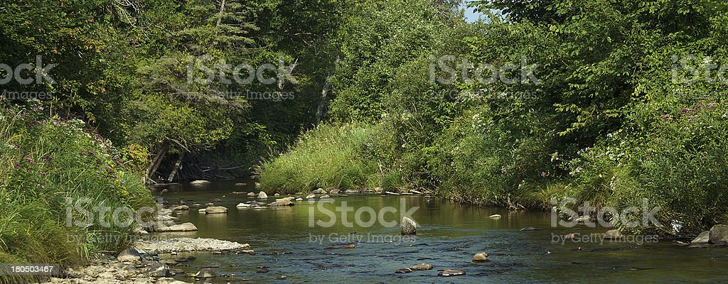 Canadian Forest riverside royalty-free stock photo