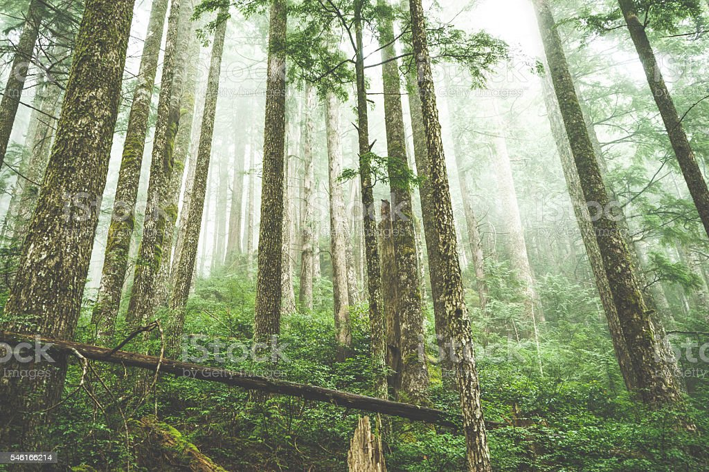Canadian Forest View from Tofino stock photo