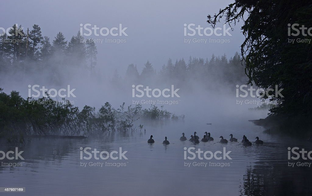 Canadian Geese Mystic Float stock photo