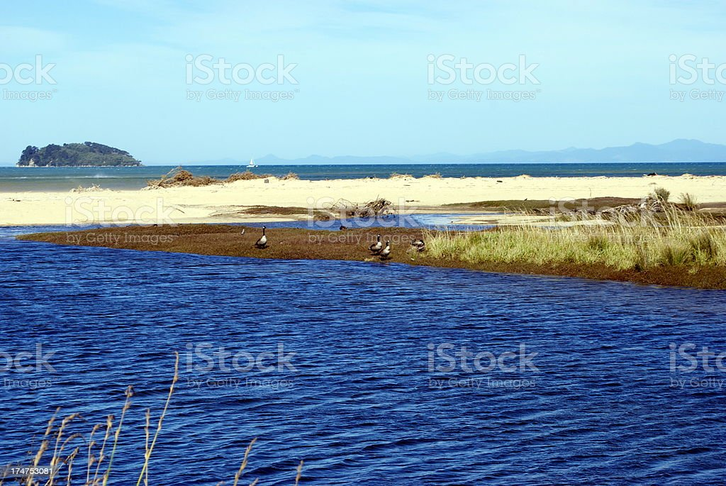 Canadian Geese on Marahau's River Estuary, Abel Tasman National Park royalty-free stock photo