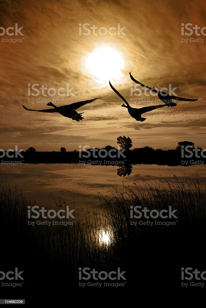Canadian Geese Silhouette royalty-free stock photo
