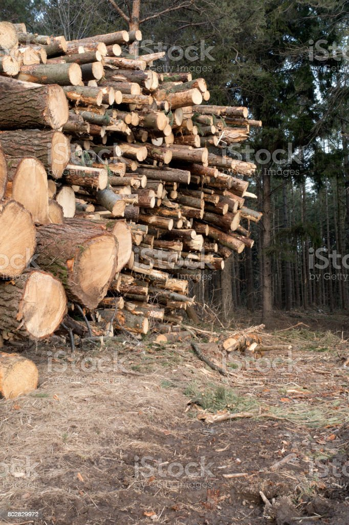 Canadian Lumber Background stock photo