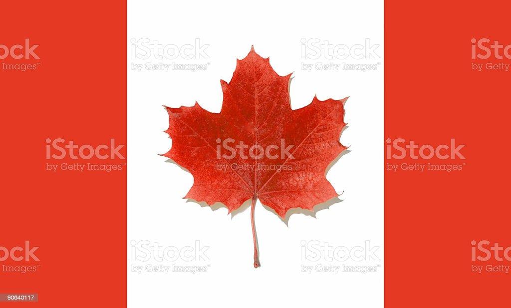 Canadian maple flag stock photo