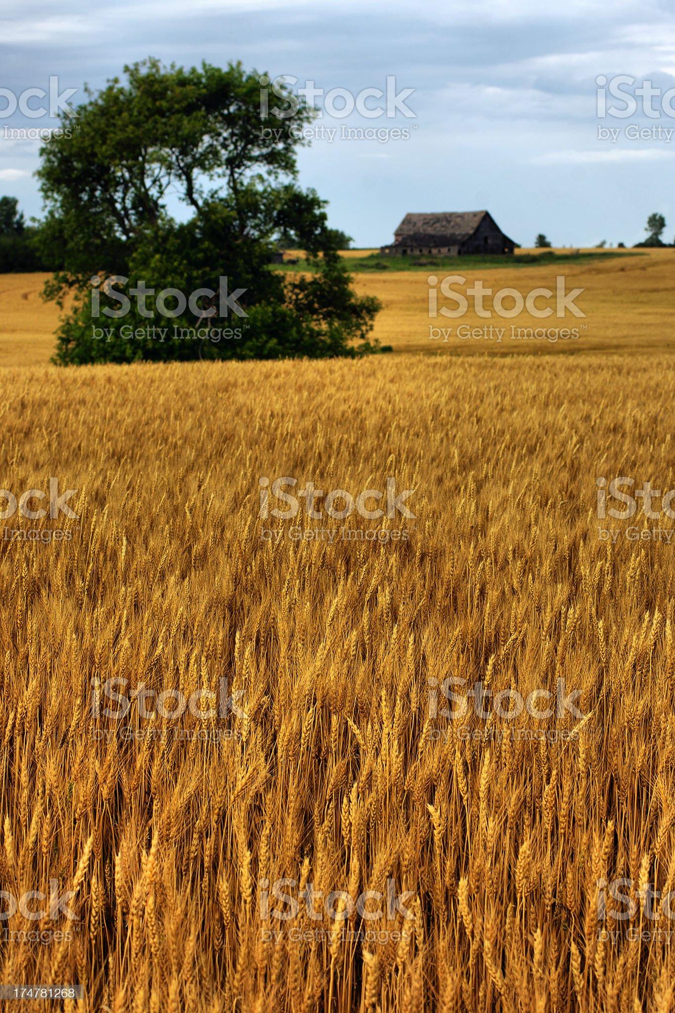 Canadian Prairies royalty-free stock photo