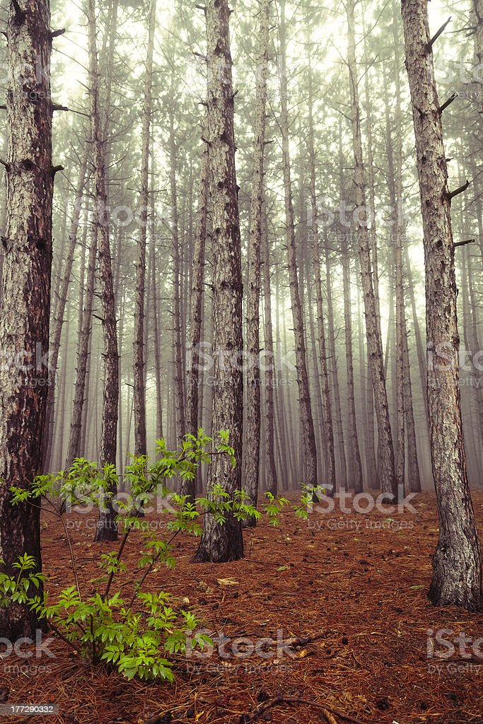 Canadian Woods royalty-free stock photo