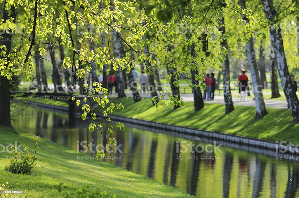 canal in a park with Birch Tree royalty-free stock photo